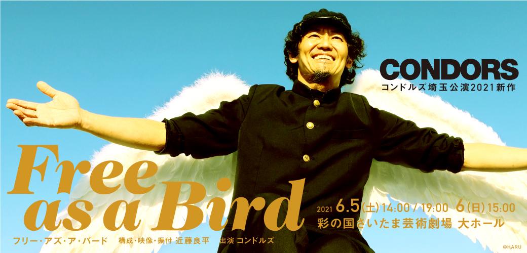 コンドルズ Free as a Bird